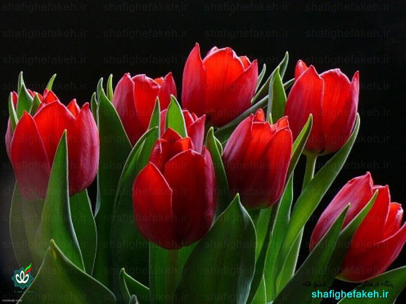 گلزارشهدای گلخندان پردیس بومهن